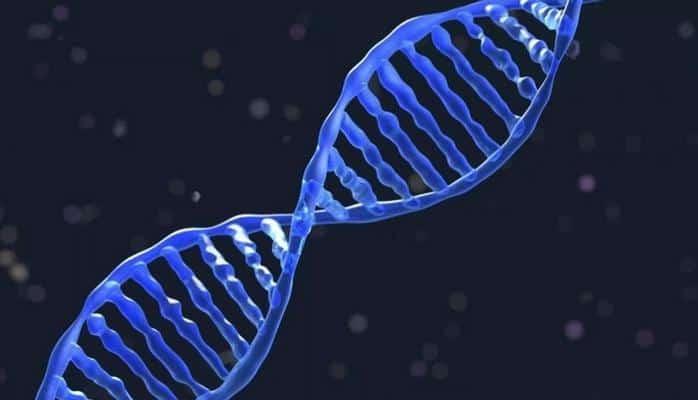 Wikipedia'nın 16 GB'lık verisi DNA'ya kaydedildi