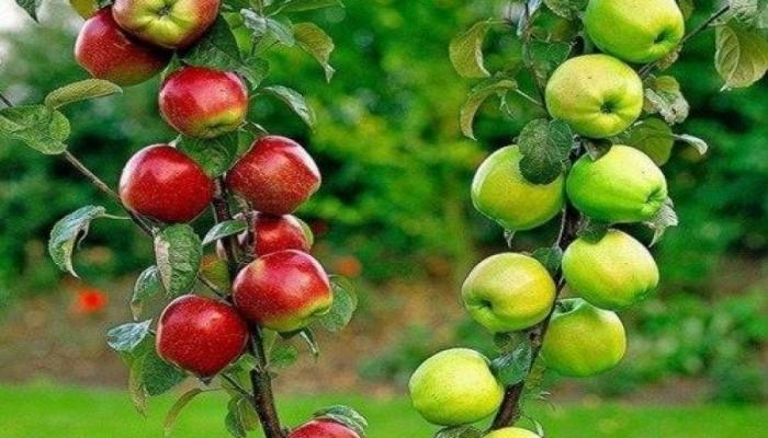 Яблоки дорожают из-за слабого урожая