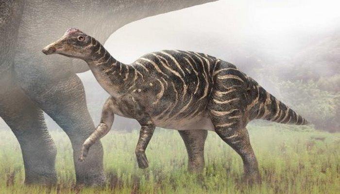 В Монголии обнаружен новый вид гадрозавра