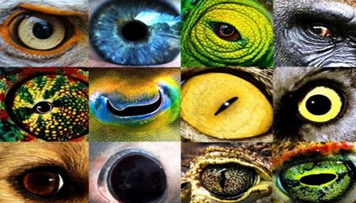 Müxtəlif heyvanlar  dünyanı necə görürlər?