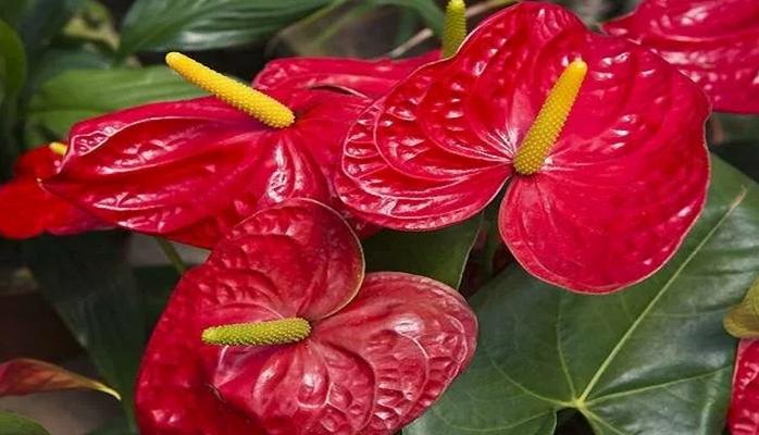 5 опасных комнатных растений