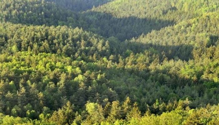 В Азербайджане охрану лесов могут поручить охранной полиции или частным организациям