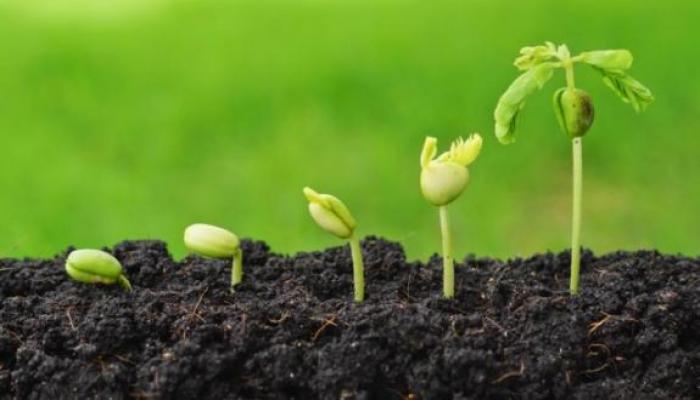 В Азербайджане в госсреестр предлагается включить ряд ценных сельскохозяйственных культур