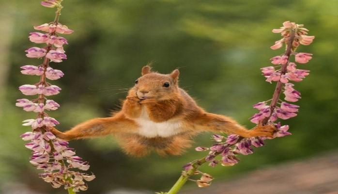 Фото, прошедшие вфинал конкурса осмешных снимках дикой природы