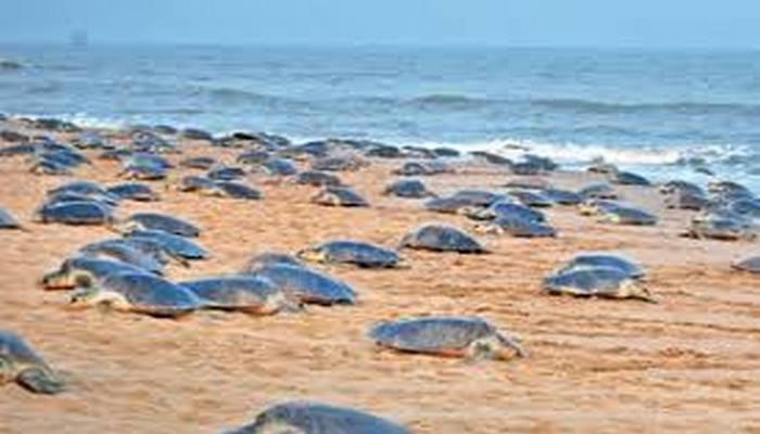 Koronavirüs onlara yaradı: Milyonlarcası sahile çıktı
