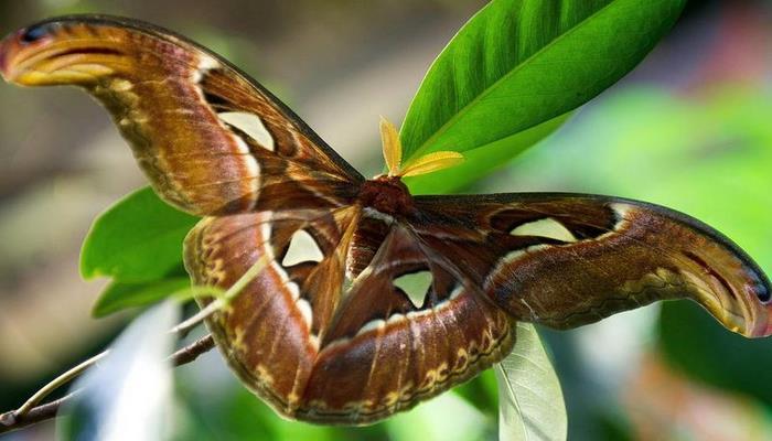 В Праге появилась самая большая в мире бабочка