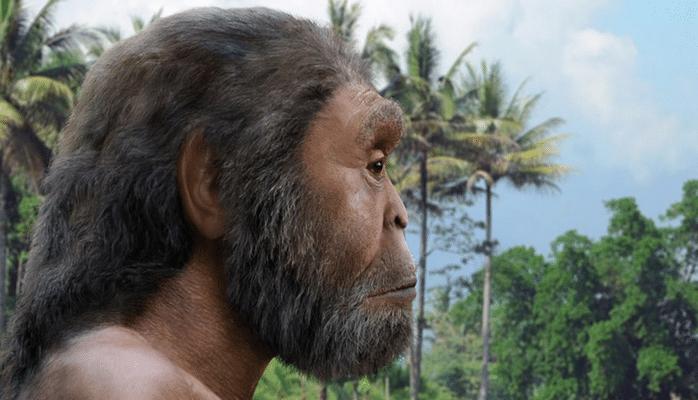 Homo erectus умели запасать еду впрок
