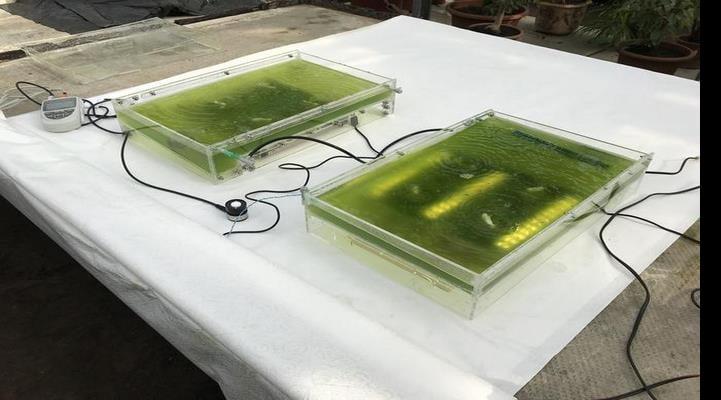 Fotosintez edən mikroorqanizmlər şəhərlərdə suyu təmizləməyə kömək edəcək