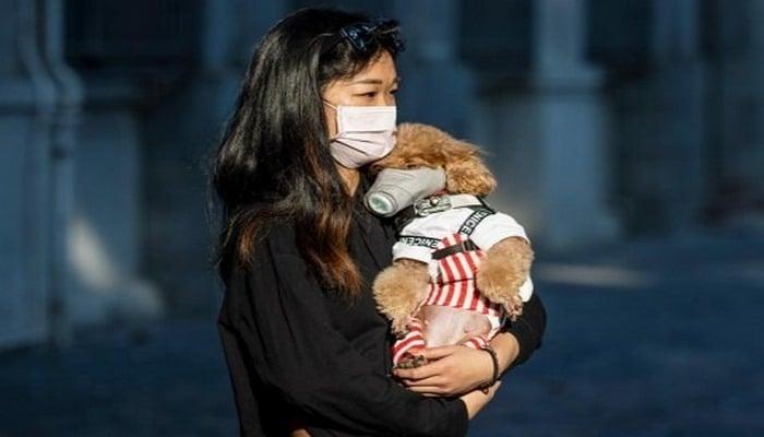 В Китае полностью запретили употреблять в пищу мясо диких животных