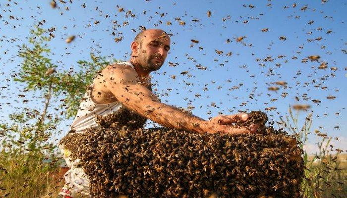 Vanlı Abdulvahap üzerine 10 kilogram arı topladı