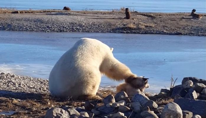 Dünyanın marağına səbəb olan video — Qütb ayısı itin başını sığalladı