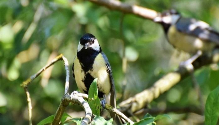 Ученые объяснили, почему птицы превращаются в жестоких убийц