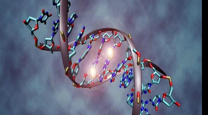 Обнаружен новый фундаментальный путь регуляции генов
