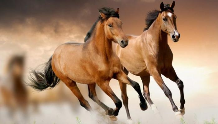 Sumqayıtda Qarabağ atlarının heykəli ucaldılacaq