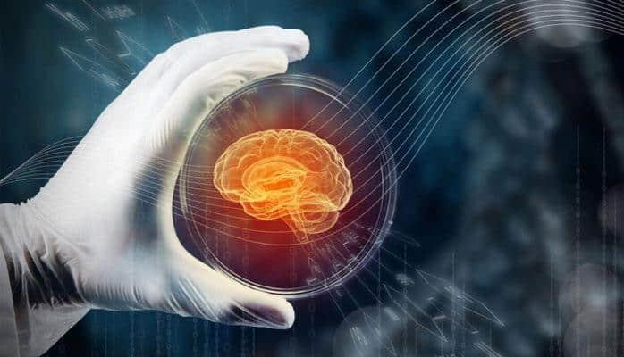 Metal canlı-lar üçün mini beyin yaradıldı – İxtira kosmosa göndərilən hörümçəkşəkilli robota quraşdırıldı