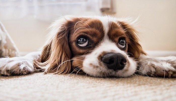 Ученые рассказали, почему диабетикам стоит завести собаку