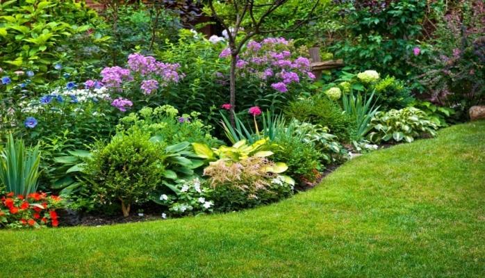 Alimlərdən şoka salan açıqlama: Bitkilər qışqıra bilir