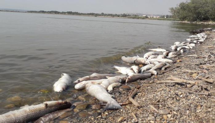 Fransada ekoloji fəlakət: minlərlə balıq məhv oldu