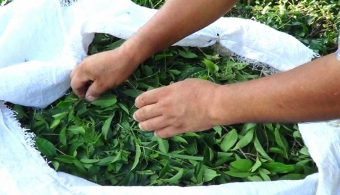 В этом году из страны экспортировано 1 186 тонн чая