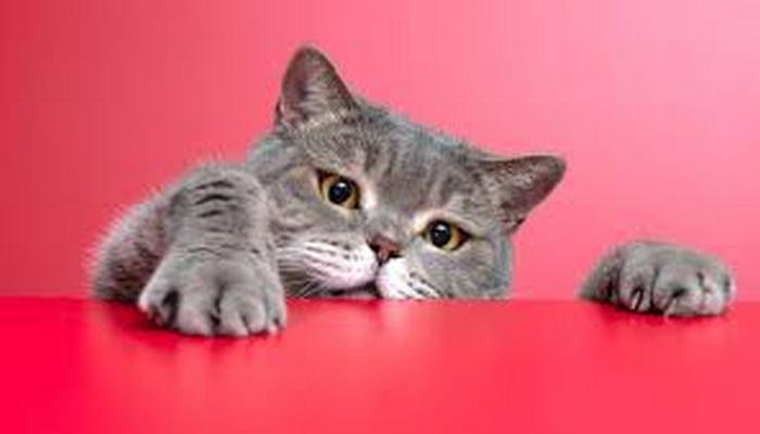 Kediler insanları kandırıyor mu? Kedi beyni hakkındaki tüm gizemler!
