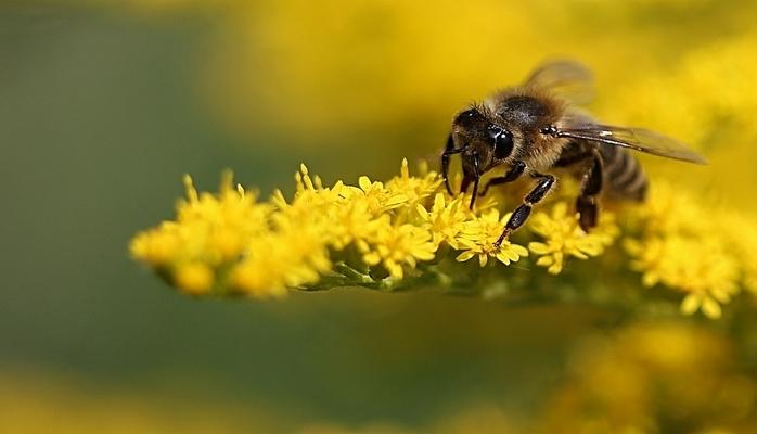 Arılar gün batması zamanı donub qalırlar