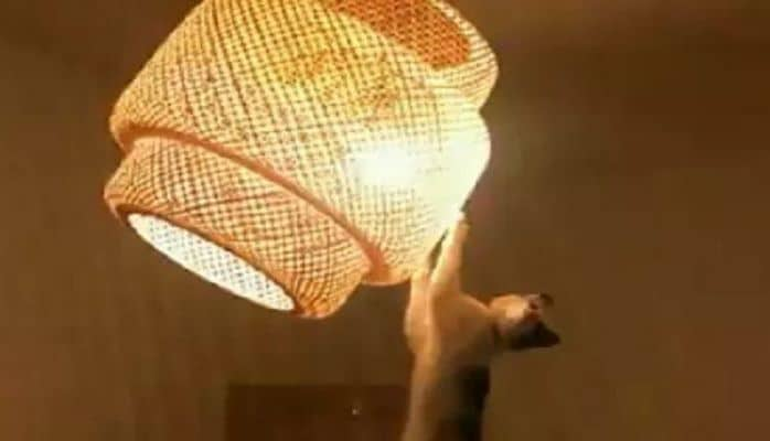 "Кот-""мотылек"" стал суперпопулярным благодаря интернету"