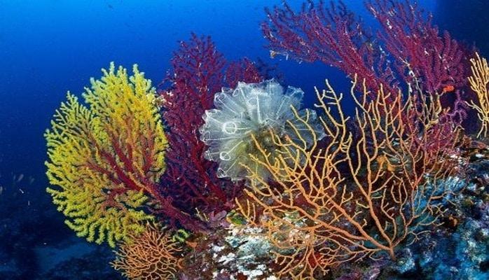 Кораллы возрождаются в тёплой воде и снова начинают расти.