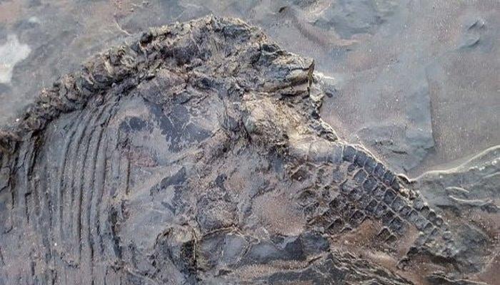 Alimlər Kentukki Mağarasında 330 milyon il qabaq daşa dönmüş köpək balıqlarının izlərini tapıblar