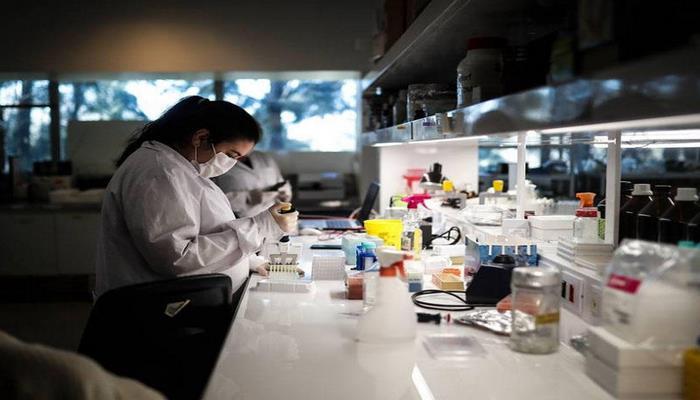 Alimlər at antitelləri əsasında koronavirusa qarşı dərman hazırlayırlar