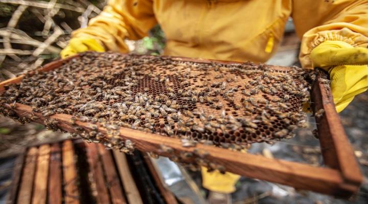 Азербайджан хочет распространить опыт Турции в пчеловодстве в СНГ