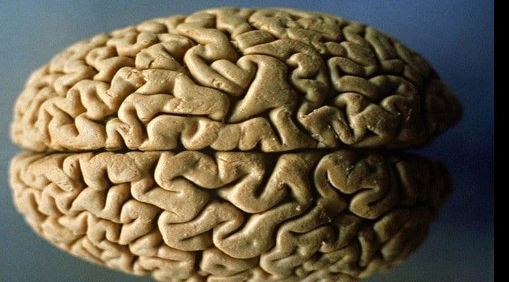 5 продуктов, которые защищают головной мозг от возрастной деградации
