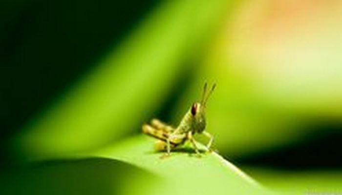 1990 Yılından Bu Yana Böcek Sayısı %25 Oranında Azaldı!