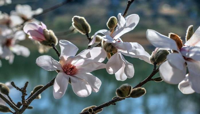 Ученые выяснили, как весна меняет организм человека