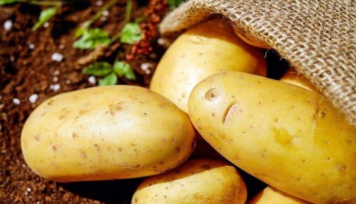 В Великобритании испытали генномодифицированный картофель