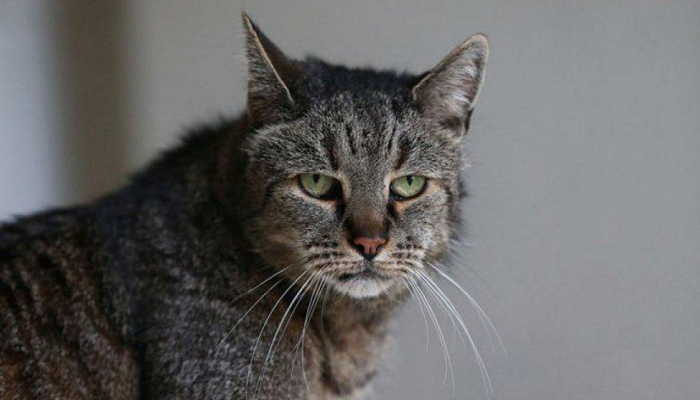 Мужчина жил в квартире со 110 кошками