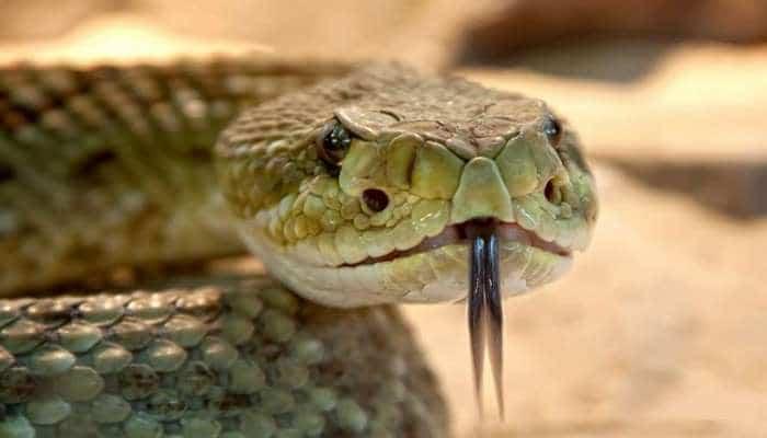Ученые установили, для чего змеям изначально понадобился яд