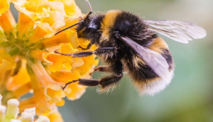 Azərbaycanda olan arı cinsi dünyanın ən yaxşı arısı hesab olunur - Səbəb?