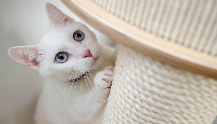 Эксперт назвала 9 команд, которым можно научить любую кошку