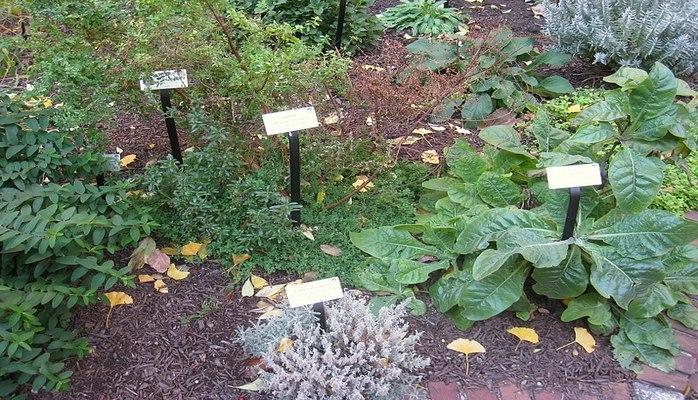 Şifalı bitki