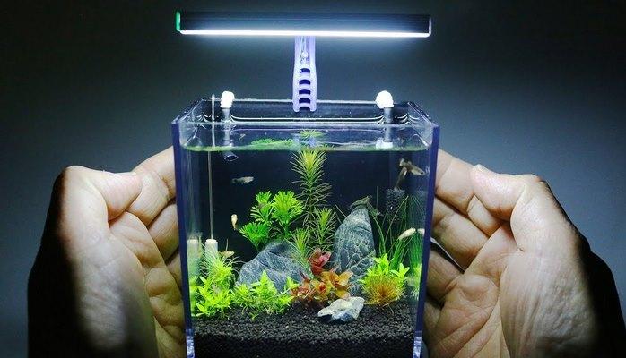 Как сделать самый маленький аквариум для растений